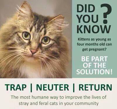 How Soon Can A Cat Be Neutered