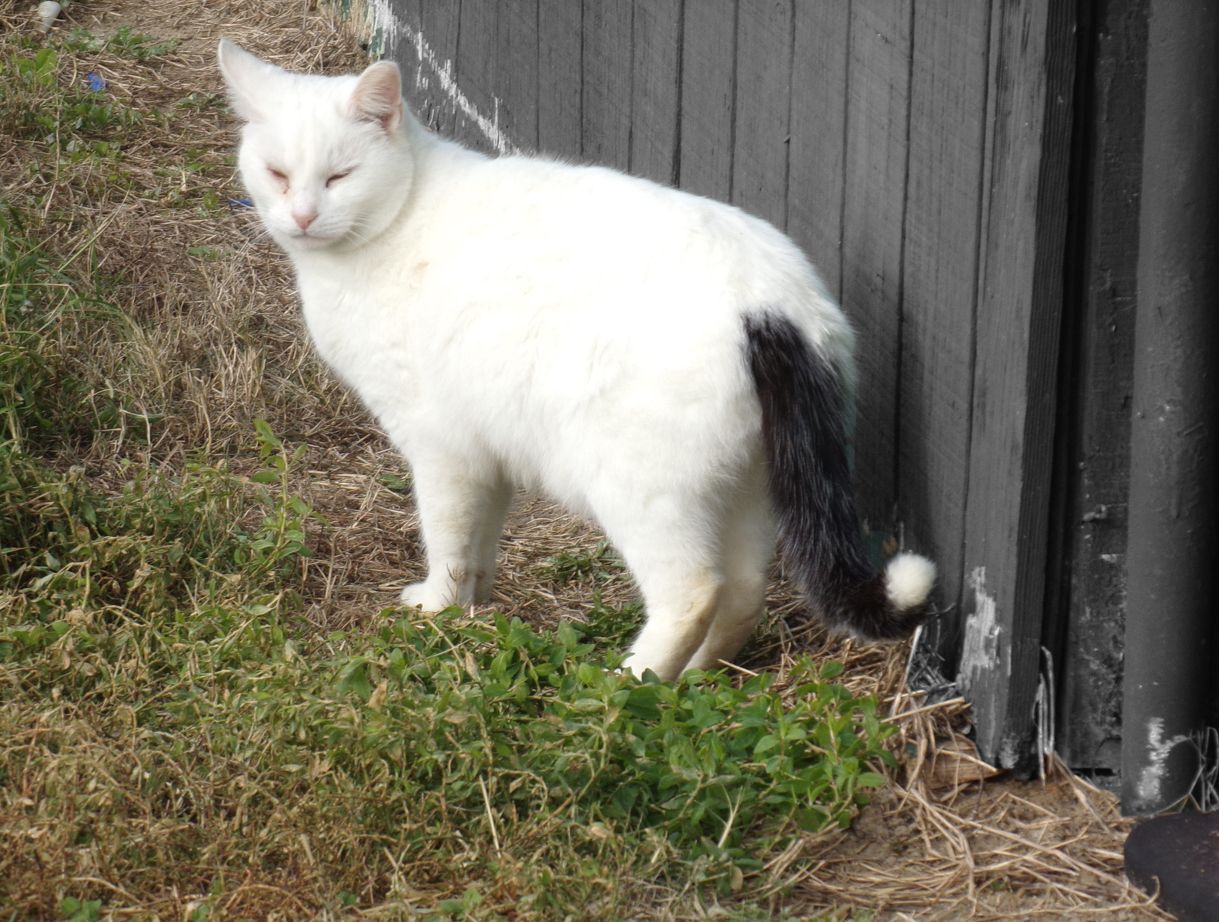 Barn Cats For Adoption In Maryland
